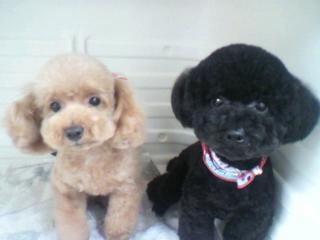 N:Nene&Coco