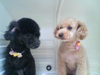 F: Coco&Mashu