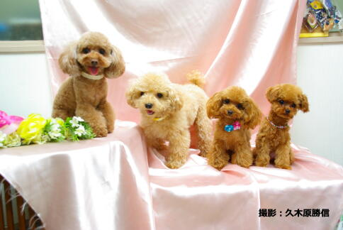 M: Choco & Non & Titi & Jyujyu