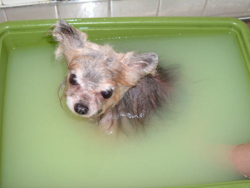 N:温浴中